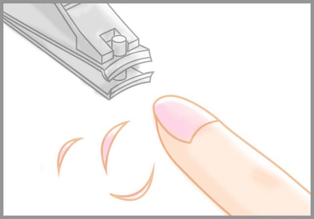 爪の長さを確認する